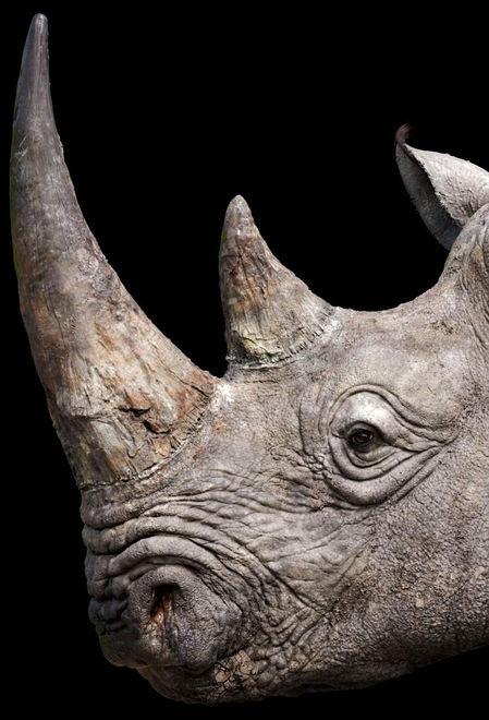 Jopolo24 rhino life 5b5e587f ovyd
