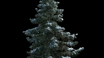 Snow tree Test