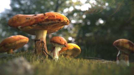 Megascans Mushroom