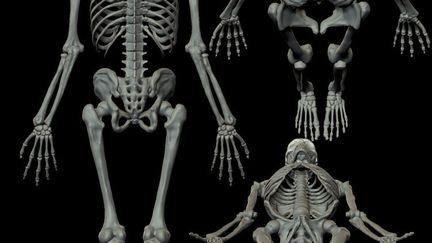 Anatomy study 02