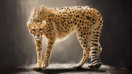 Persian Cheetah