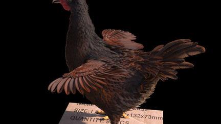 Hen (Chicken) 3d Feather