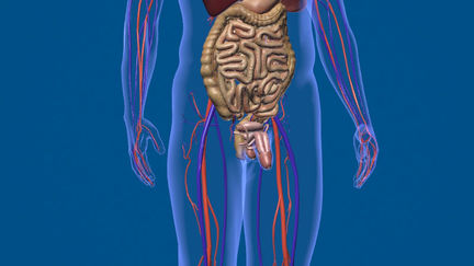 3D Human Anatomy (Male)