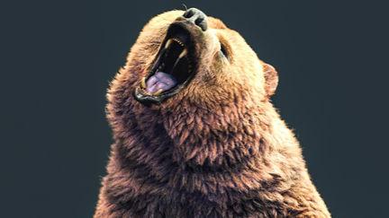 Bear upright