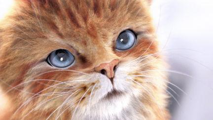 Orange Tabby Kitten test