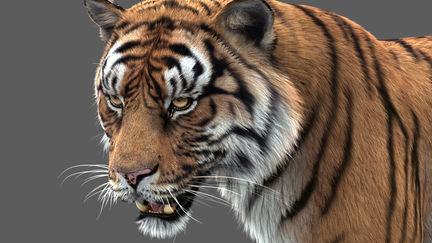 Tiger Updated asset