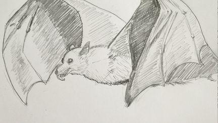 Observational drawing #1, Bat