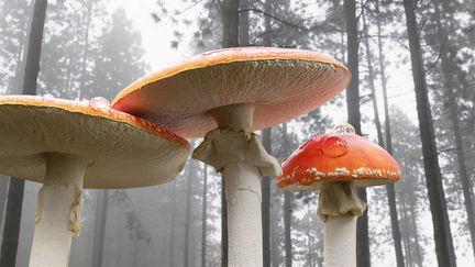 Assets - Mushrooms