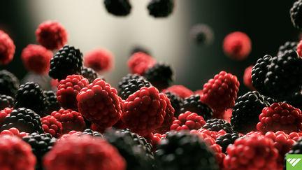 Dance Berry