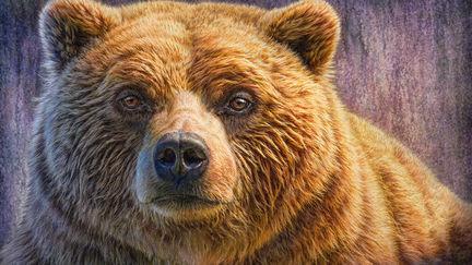 Grizzly Portrait