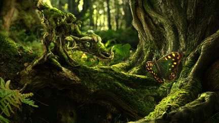 The Moss Dragon and the Butterfly