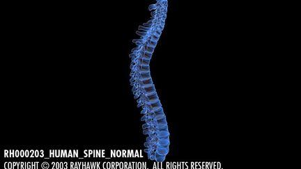 RH000203_Human_Spine_Normal