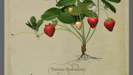 Old botany