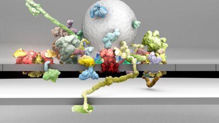Cav2 channel nano-environments
