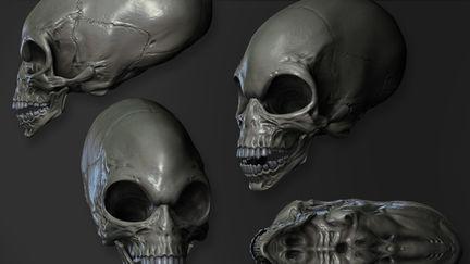 Crystal Skull Sculpt