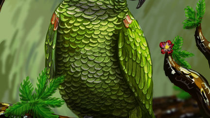 Kiko the parrot