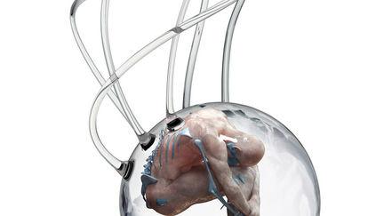 Human + Exhibition  -  Embryo III - Redux
