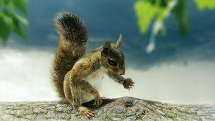 squirrel psyco