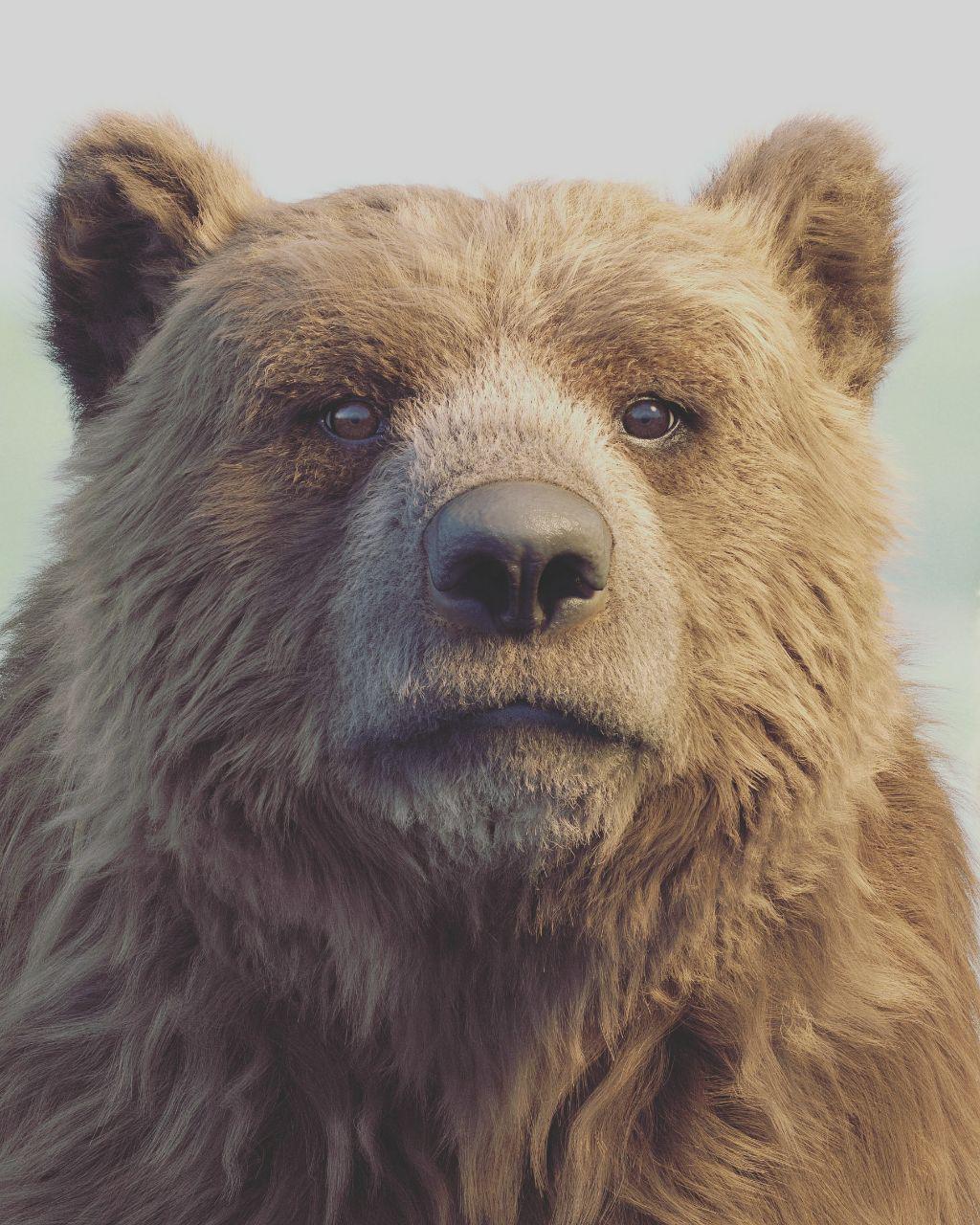 Alireza akhbari bear 1 a4b50b98 6dfa