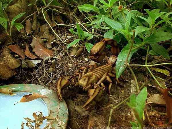 Andholzmeister scorpion 1 85acc560 zb7z