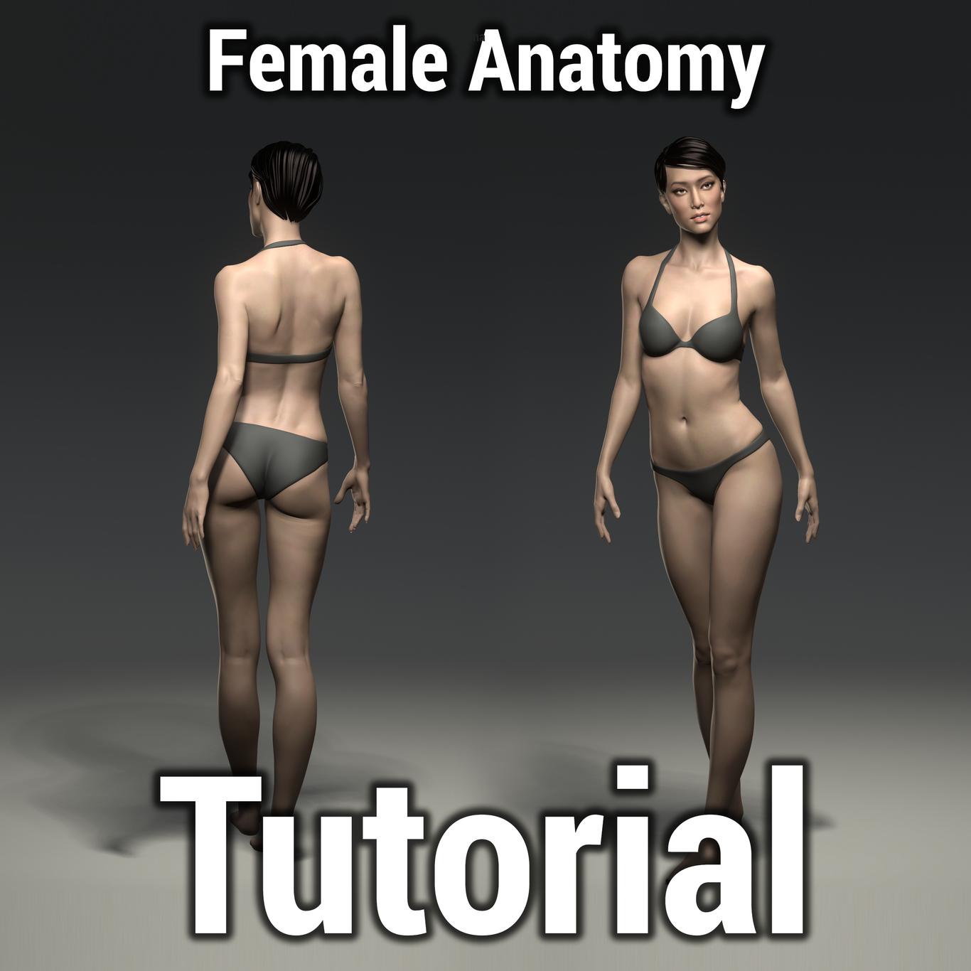 Donnaurdinov female anatomy tutor 1 fa1841f2 ragu