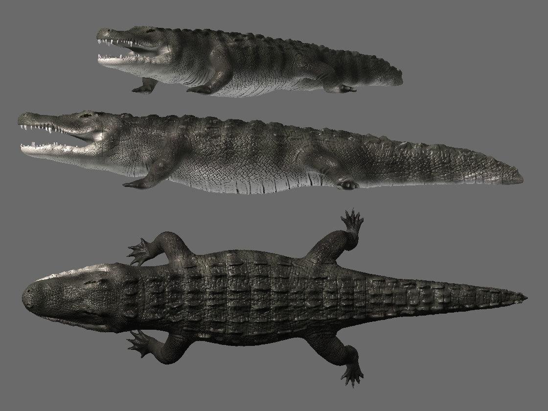 Fluxist8070 american alligator 1 84d6a09f rjrw