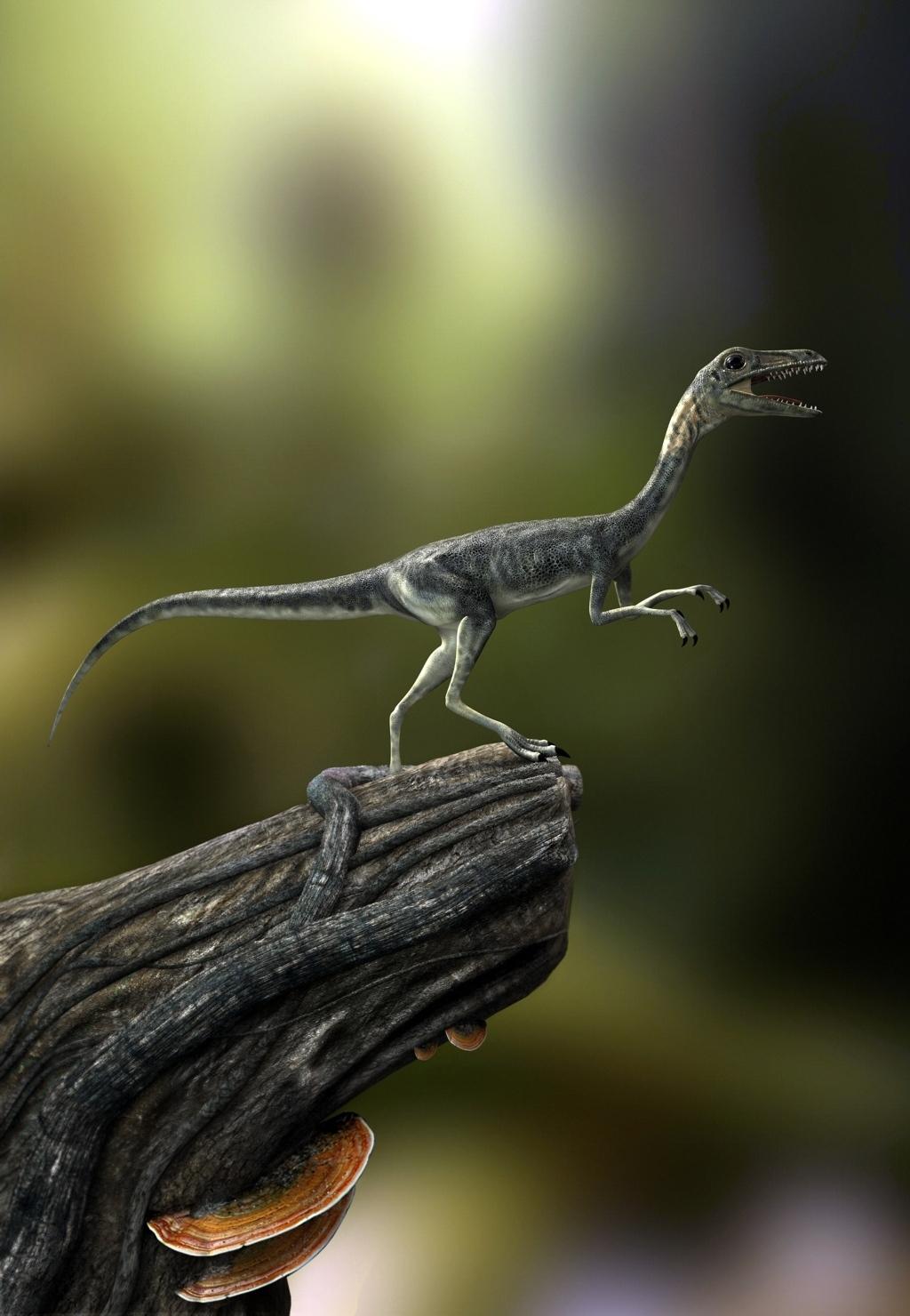 Hcosta compsognathus 1 ef4b0fb3 szi4