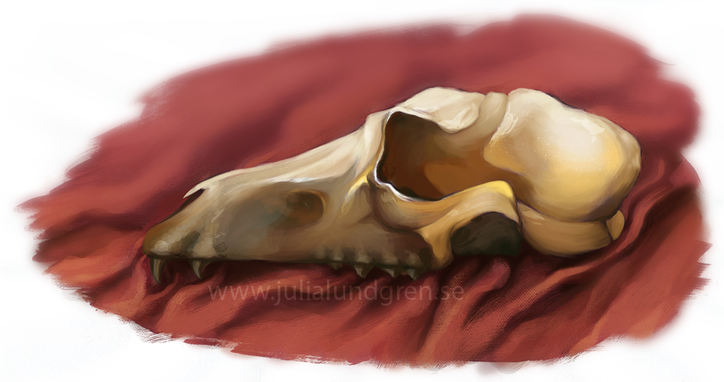 Lambidy canine skull study 1 ce20f2f4 mt9f
