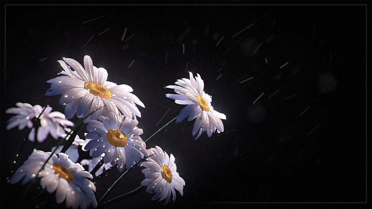 Lawl daisies study 1 ab519d30 pam6