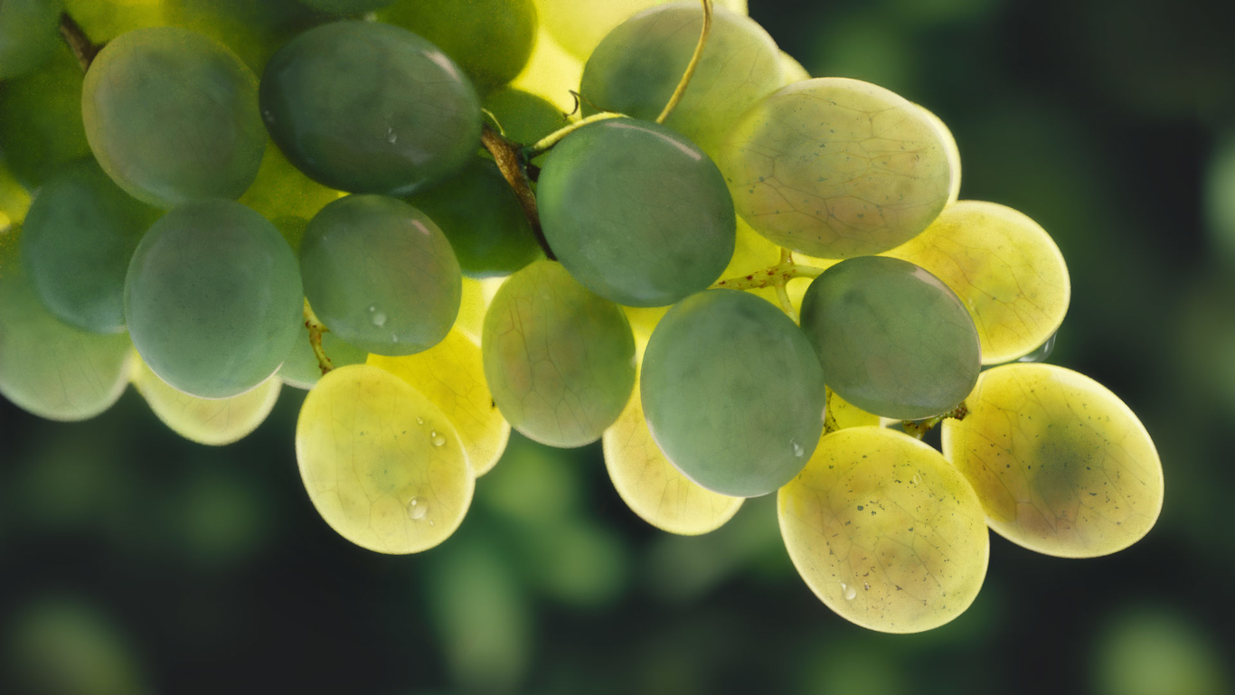 Spelle grapes and plants 1 ed8e0590 a97n