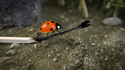 Wrong Ladybug